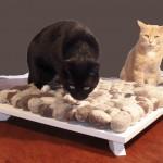 Katzenbett 1