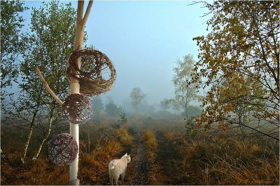 Ein-Traum-Mit-Katzenbaum